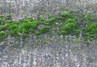 Hydrablock prevents algae moss